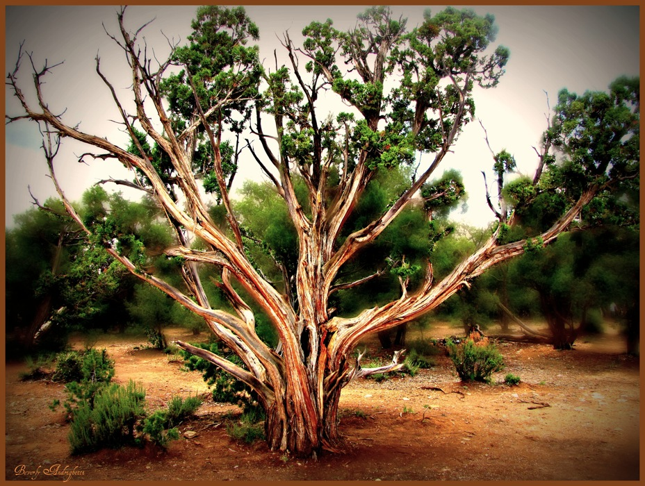 photoblog image Grand Canyon Tree