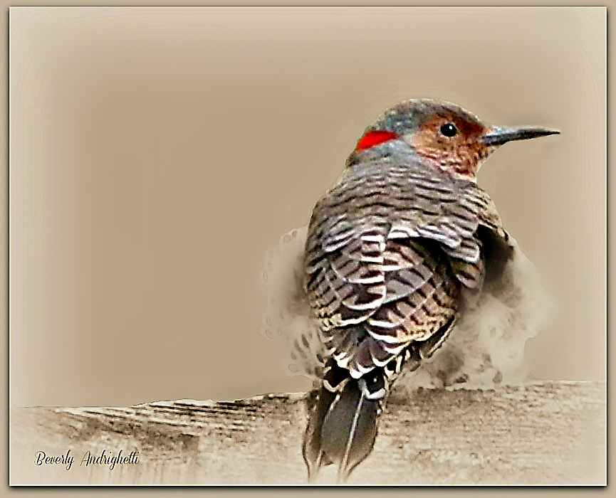 photoblog image Woodpecker At Rest