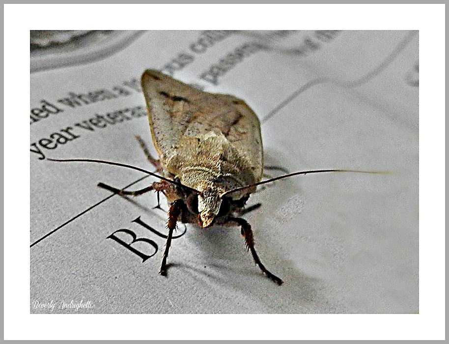 photoblog image Educated Moth