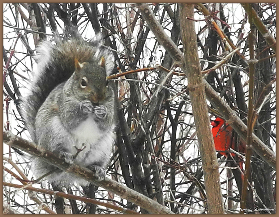 """photoblog image """"Care to Share, Mr. Squirrel?"""""""
