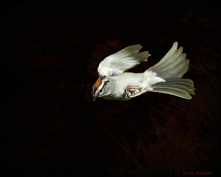 photoblog image Sparrow
