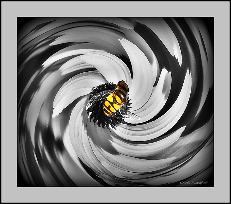 photoblog image Bee In A Swirly Whirl