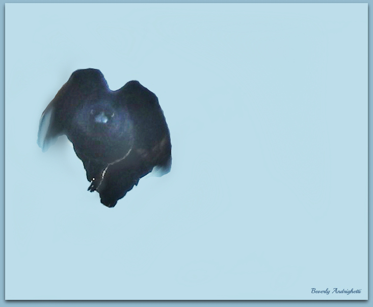 photoblog image Spooky Grackle
