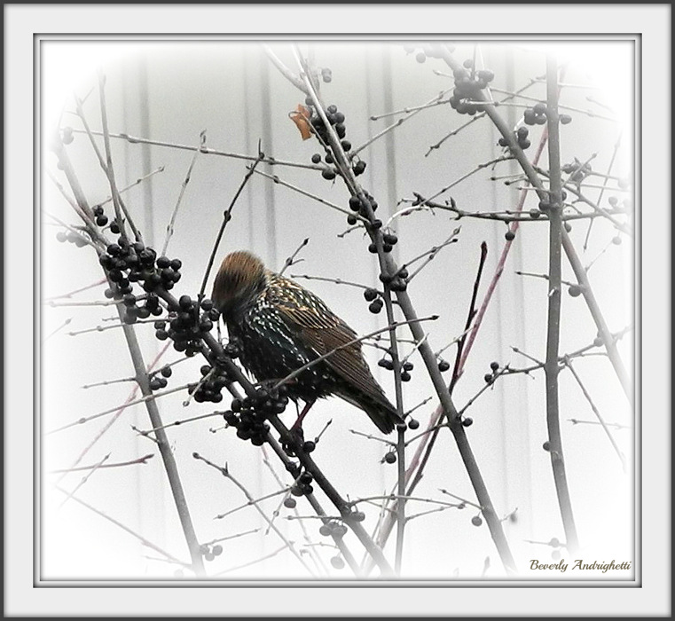 photoblog image Starling Treats