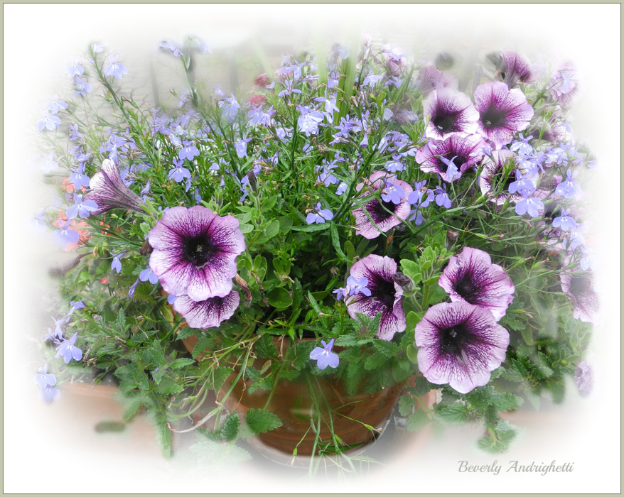 photoblog image Blooming Pot